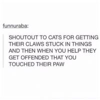 pawe: funnuraba:  SHOUTOUT TO CATS FOR GETTING  THEIR CLAWS STUCK IN THINGS  AND THEN WHEN YOU HELP THEY  GET OFFENDED THAT YOU  TOUCHED THEIR PAW