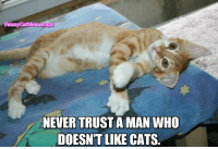 From Funny Cat Memes: Funny CatMemes.xyz  NEVERTRUSTAMAN WHO  DOESN'T LIKE CATS. From Funny Cat Memes