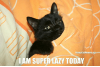 From Funny Cat Memes: Funny CatMemesXyz  I AM SUPER LAZY TODAY From Funny Cat Memes