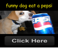 Click, Funny, and Gif: funny dog eat a pepsi  Click Here mutualjacking: