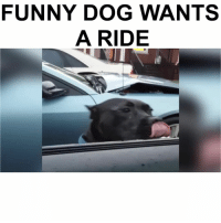 Memes, 🤖, and Funny Dog: FUNNY DOG WANTS  A RIDE Follow me (@hangars) for more! 💕 - - @hangars @hangars @hangars @hangars @hangars @hangars @hangars @hangars @hangars