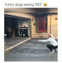 "Dogs, Funny, and Memes: Funny dogs saying ""NO"" I'm laughing way too hard at this 😂 