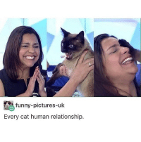 Funny, Love, and Memes: funny-pictures-uk  Every cat human relationship. i love libraries tbh :~)) @nuggeret