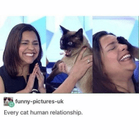 Funny, Lazy, and Memes: funny-pictures-uk  Every cat human relationship. sorry i haven't been posting a lot i've been busy and lazy and didn't have a lot of videos to post in order to keep my theme going
