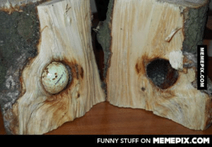 This tree grew around a golf ballomg-humor.tumblr.com: FUNNY STUFF ON MEMEPIX.COM  МЕМЕРIХ.сом This tree grew around a golf ballomg-humor.tumblr.com