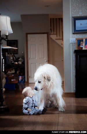 My 7 month old son was sitting playing when my wife's Great Pyreneese walked up and sat beside him.omg-humor.tumblr.com: FUNNY STUFF ON MEMEPIX.COM  MEMEPIX.COM My 7 month old son was sitting playing when my wife's Great Pyreneese walked up and sat beside him.omg-humor.tumblr.com