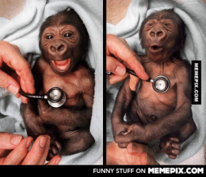 Newborn baby Gorilla reacts to the coldness of a stethoscopeomg-humor.tumblr.com: FUNNY STUFF ON MEMEPIX.COM  MEMEPIX.COM Newborn baby Gorilla reacts to the coldness of a stethoscopeomg-humor.tumblr.com
