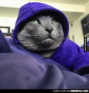 This cat looking like she's about to drop the hottest mixtape of 2015.omg-humor.tumblr.com: FUNNY STUFF ON MEMEPIX.COM  MEMEPIX.COM This cat looking like she's about to drop the hottest mixtape of 2015.omg-humor.tumblr.com