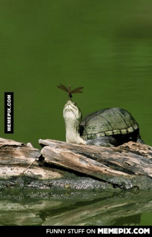 Turtle and dragonfly , what a sceneomg-humor.tumblr.com: FUNNY STUFF ON MEMEPIX.COM  MEMEPIX.COM Turtle and dragonfly , what a sceneomg-humor.tumblr.com