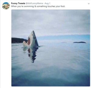Funny Tweets: Funny Tweets @tbhFunnyMeme Aug 1  When you're swimming & something touches your foot