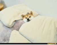 You've been visited by the shibe of good dreams. Comment 'sleep well pupper' for good dreams and comfortable sleep.  ~Admin Shiborange: funny You've been visited by the shibe of good dreams. Comment 'sleep well pupper' for good dreams and comfortable sleep.  ~Admin Shiborange