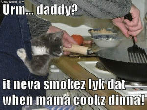 Lolcats - dinner - LOL at Funny Cat Memes - Funny cat pictures with ...: funnycatsite.com  Urm..daddy?  it neva smokez lyk dat  when mama cookz dinna! Lolcats - dinner - LOL at Funny Cat Memes - Funny cat pictures with ...