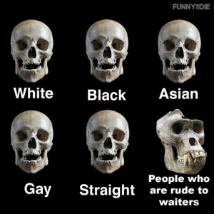 DO NOT: FUNNYSDIE  White  Black Asian  People who  Gay Straight are rude to  waiters DO NOT