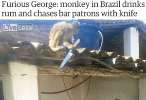 Mood: Furious George: monkey in Brazil drinks  rum and chases bar patrons with knife Mood