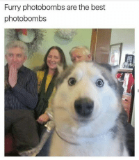 furrys: Furry photobombs are the best  photobombs