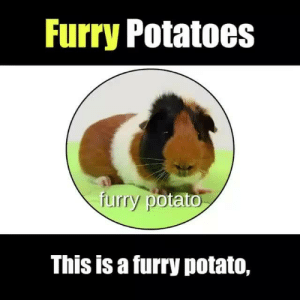 9gag, Memes, and Potato: furry Potatoes  uirry pot  ato  This is a furry potato, Furry potatoes 101⠀ -⠀ By @lucidchart⠀ -⠀ 9gag guineapig