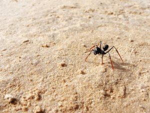 News, Tumblr, and Blog: futureprof09:  coolthingoftheday:  Scientists once performed an experiment on ants by attaching stilts to their legs in order to prove that ants return to their nests by counting their steps. The ants wearing the stilts overshot their nest by roughly 50% due to the increased length of their stride.(Source)  Science!!
