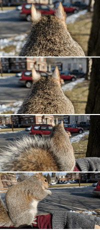 Squirrel, Adorable, and Her: Fuzzy February Day 3 featuring adorable squirrel ears