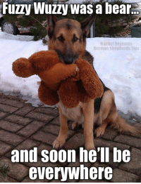 Do you have a stuffie killer?   *giggle*: Fuzzy Wuzzy Was a bear.E  R elie Reynolds  German Shepherds Tips  and soon he'll be  everywhere Do you have a stuffie killer?   *giggle*