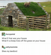 Memes, Minecraft, and Wow: fuzzypetal  What if that was your house  What if a sheep lives off the grass on your house  saltymommie  Shes my landlord this reminds me of Minecraft when u randomly have a mob on top of ur buildings and ur just like ... wow ... get dat grass - Max textpost textposts