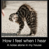 So true! 😫😭😂-Comment you favorite color, mine's blue!: How I feel when I hear  A noise alone in my house So true! 😫😭😂-Comment you favorite color, mine's blue!