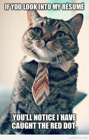 Funny, Resume, and Net: FYOULOOKINTOMY RESUME  YOULL NOTICE I HAVE  CAUGHT THE RED DOT  LeFunny.net Funny cat interview with resume