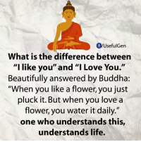 """Buddha: fyUsefulGen  What is the difference between  """"I like  you"""" and """"I Love You  Beautifully answered by Buddha:  """"When you like a flower, you just  pluck it. But when you love a  flower, you water it daily.""""  one who understands this,  understands life."""