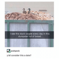 Ironic, Date, and Duck: G BELL  FOR  I see this duck couple every day in this  dumpster full of bread.  joshpeck  y'all consider this a date? my boyfriend thats not yet my boyfriend might be able to come see me before he goes to airforce training :))))))im in luv w him kinda -jessica
