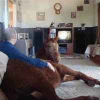 Just a guy watching football with his best friend. (Tumblr: flarechaser): g@ Just a guy watching football with his best friend. (Tumblr: flarechaser)