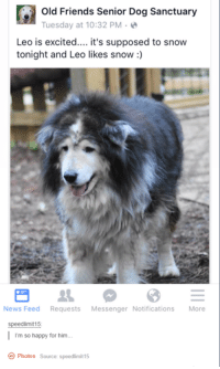 Old Friends Senior Dog Sanctuary: G Old Friends Senior Dog Sanctuary  Tuesday at 10:32 PM  Leo is excited  it's supposed to snow  tonight and Leo likes snow  News Feed  Requests  Messenger Notifications  More  Speedlimit15  m so happy for him.  Photos source: speedlimit15