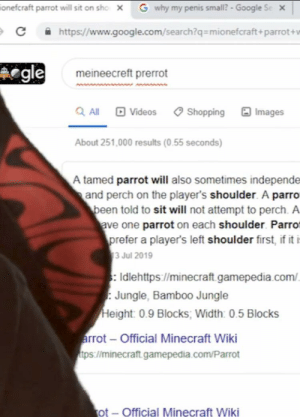 Google, Minecraft, and Shopping: G why my penis small? - Google Se  onefcraft parrot will sit on sho  x  https//www.goog le.com/search?q= mionefcraft+parrot+w  C  egle  meineecreft prerrot  QAll Videos Shopping Images  About 251,000 results (0.55 seconds)  A tamed parrot will also sometimes independe  and perch on the player's shoulder. A parro  been told to sit will not attempt to perch. A  ave one parrot on each shoulder. Parro  prefer a player's left shoulder first, if it i  3 Jul 2019  sIdlehttps:/minecraft gamepedia.com/  Jungle, Bamboo Jungle  Height: 0.9 Blocks, Width: 0.5 Blocks  arrot-Official Minecraft Wiki  tps://minecraft.gameped ia.com/Parrot  ot-Official Minecraft Wiki What is your other tab, Felix, Please Explain