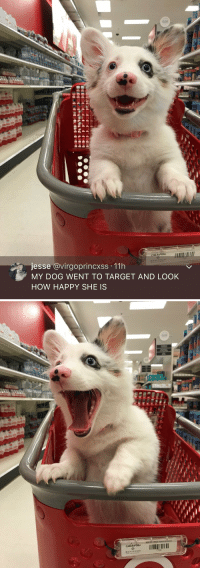 Corgi, Target, and Happy: G28  jesse @virgoprincxss 11h  MY DOG WENT TO TARGET AND LOOK  HOW HAPPY SHE IS   028  7786 THIS LIL CORGI WENT TO TARGET AND LOOK HOW HAPPY SHE IS 😭😍 https://t.co/Zr61ymrEdf
