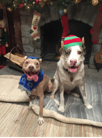 Merry Christmas and Happy Hanukkah from these two dogs in people clothes!: Ga Merry Christmas and Happy Hanukkah from these two dogs in people clothes!