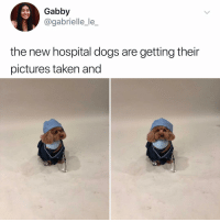 Dogs, Memes, and Taken: Gabby  @gabrielle_le_  the new hospital dogs are getting their  pictures taken and Post 1462: y the hELL havent u followed @kalesaladanimals yet
