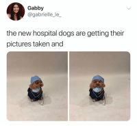 Cute, Dogs, and Memes: Gabby  @gabrielle_le_  the new hospital dogs are getting their  pictures taken and Omg so cute