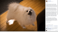 """<p>Gabe The Dog just passed away, Can we have a moment of silence for one of the greates that helped boom this business via /r/MemeEconomy <a href=""""http://ift.tt/2jUWXZk"""">http://ift.tt/2jUWXZk</a></p>: Gabe the Dog  Like This Page 59 mins  Friends,  It is with condolences that I must tell you Gabe  passed away yesterday morning. He had been  struggling with his heart for quite some time, and it  very suddenly became worse. He went peacefully  being loved with his family with a smile on his face.  All things considered, Gabe had a good run. He  was already pushing his senior years when we  picked him up from the shelter, but still blessed us  with six years of loving, dancing and borking. His  borks never slowed down until his very last dayl  Not only was Gabe a wonderful part of our family -  his entertainment career was greater than I ever  could have dreamed of. Something that started as  a joke for my friends quickly became a global  sensation, going as far as national TV in Japanl It  really meant a lot to our family to see the joy he  spread to everyone. We feel we made a positive  effect on the world by sharing Gabe's smile with  And with that, I thank you. You, the content  creators, the fans leaving comments, sharing his  pictures and spreading the message, made Gabe  into something very special that won't be forgotten.  Gabe may have crossed the rainbow bridge but his  joy remains with all of us.  Sleep tight, pupper  Like -Comment → Share  Sunna Sol and 26k othersTop comments  5,230 shares  5.9k comments  Christopher Augustsson BORK IN DOG HEAVEN  SWEET PUPPER  Write a comment <p>Gabe The Dog just passed away, Can we have a moment of silence for one of the greates that helped boom this business via /r/MemeEconomy <a href=""""http://ift.tt/2jUWXZk"""">http://ift.tt/2jUWXZk</a></p>"""
