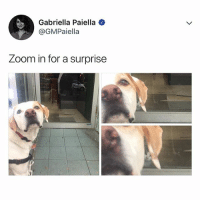 Funny, Ted, and When You See It: Gabriella Paiella  @GMPaiella  Zoom in for a surprise Double tap when you see it (@hilarious.ted)
