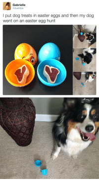 easter eggs: Gabrielle  duahlipa  l put dog treats in easter eggs and then my dog  went on an easter egg hunt