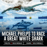 Memes, Shark, and Michael: GacBSSports  MICHAEL PHELPS TO RACE  A GREAT WHITE SHARK  PHELPS: 23  GOLD MEDALS  SHARK: 0 GOLD MEDALS Phelps has the clear edge in Olympic medals, and fingers.