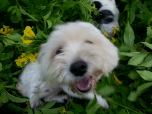 Gali and Lola in the flowers: Gali and Lola in the flowers