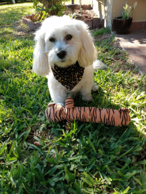 Gali is proud of her new toy: Gali is proud of her new toy