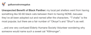 """Black Panther is rescuing cats: gallusrostromegalus  Unexpected Benefit of Black Panther: my local pet shelters went from having  something like 50-60 black cats between them to having NONE, becuase  they've all been adopted out and named after the characters. """"T'challa"""" is the  most popular, but there are a fair number of """"Okoye""""s and """"Shuri""""s as well  ...and one very confused Elderly Humane Society Volunteer wondering why  someone would name such a sweet cat """"Killmonger"""" Black Panther is rescuing cats"""