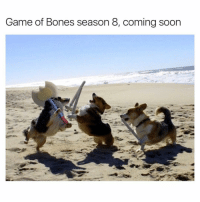 Bones, Funny, and Sword: Game of Bones season 8, coming soon How did they get swords in their paws? HOW JUST HOW (@girlwithnojob got nominated for a shorty award!!! Click the link in my bio to vote!!! VOTE PEOPLE VOTE!)