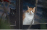 gamegrrl:  oscilite:  hidrihime:  dongboss:  imprisoned.  release them from their poorly aged cyberprisons  who censored this cat  he is nude : gamegrrl:  oscilite:  hidrihime:  dongboss:  imprisoned.  release them from their poorly aged cyberprisons  who censored this cat  he is nude