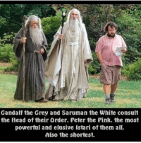 Gandalf, Head, and Memes: Gandalf the Grey and Saruman the White consult  the Head of their Order. Peter the Pink. the most  powerful and elusive Istari of them all.  Also the shortest. Dodie's covers with Thomas sanders and Jon cozart (see: come together, New York New York, city of stars) are my ultimate FAVORITESSS BC she has such a high soft voice and they both have low soothing voices and they just GO TOGETHER SO WELL
