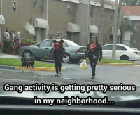Memes, Gang, and Fight: Gang activity is getting pretty serious  in my neighborhood Surrender now or prepare to fight!