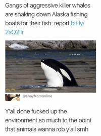 Animals, Killer Whales, and Smh: Gangs of aggressive killer whales  are shaking down Alaska fishing  boats for their fish: report bit.ly  2sQ2ilr  @shayfromonline  Y'all done fucked up the  environment so much to the point  that animals wanna rob y'all smh