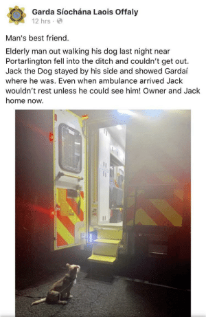 awesomacious:  You're breathtaking: Garda Síochána Laois Offaly  12 hrs  Man's best friend.  Elderly  Portarlington fell into the ditch and couldn't get out  Jack the Dog stayed by his side and showed Gardaí  man out walking his dog last night  near  where he was. Even when ambulance arrived Jack  wouldn't rest unless he could see him! Owner and Jack  home now. awesomacious:  You're breathtaking