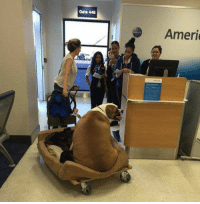 Luggage, Gate, and Big: Gate 44E  Ameri the predicament is he's too big for carry on luggage : (