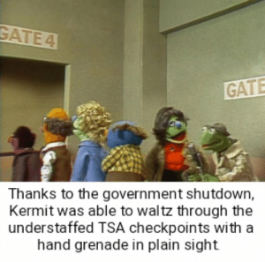 Dank, Memes, and Target: GATE  Thanks to the government shutdown,  Kermit was able to waltz through the  understaffed TSA checkpoints with a  hand grenade in plain sight Kermit the terrorist by kearnel81 MORE MEMES